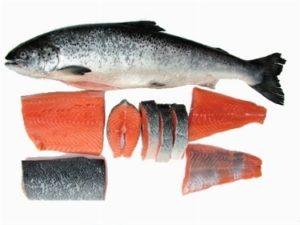 Salmone selvatico