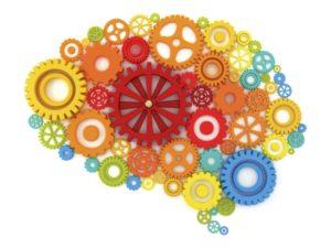 Il cervello e la neuroplasticità
