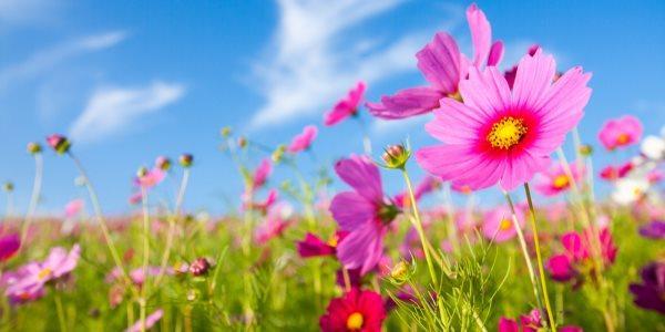 Primavera: la stagione della rinascita
