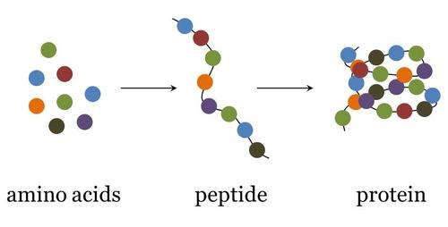 Aminoacidi, peptidi e proteine