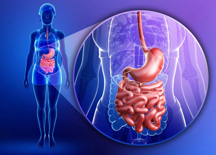 Flora batterica intestinale