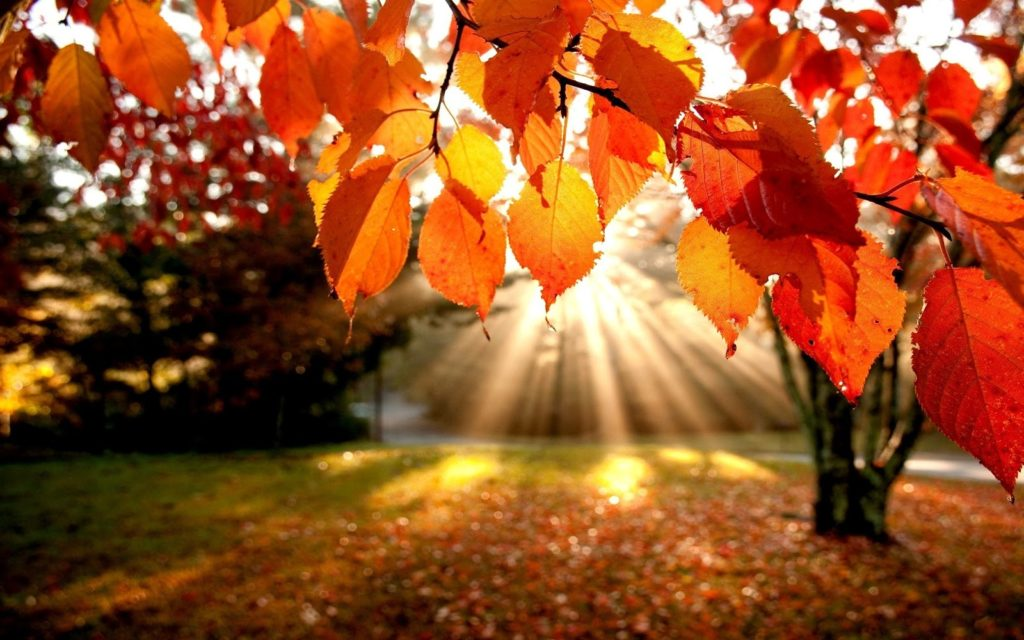Ottobre: arriva l'autunno!